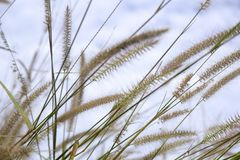 szklany kwiatu kwiat w naturze przeciw niebieskiego nieba tłu obrazy royalty free