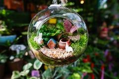 Szklany rośliny terrarium zdjęcia royalty free