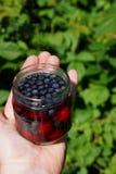 Szklany słój z czarnymi jagodami i wiśniami w wodzie na otwartej palmie Fotografia Stock