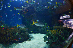 Szklany tunel w L'Oceanografic akwarium Obraz Royalty Free