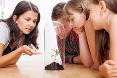 szklarni ucznie przyglądający rośliny ucznie Obraz Royalty Free