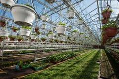 Szklarnia dla narastających warzyw pod korzystnie warunkami fotografia stock