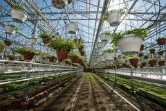 Szklarnia dla narastających warzyw pod korzystnie warunkami Zdjęcia Royalty Free