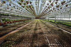 Szklarnia dla narastających warzyw pod korzystnie warunkami Obrazy Royalty Free