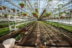 Szklarnia dla narastających warzyw pod korzystnie warunkami Fotografia Royalty Free