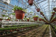 Szklarnia dla narastających warzyw pod korzystnie warunkami Zdjęcie Royalty Free