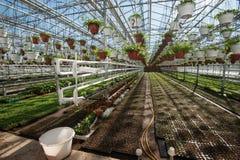 Szklarnia dla narastających warzyw pod korzystnie warunkami Obrazy Stock