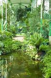 szklarnia tropikalna Obraz Stock