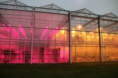 Szklarnia w Bleiswijk holandie Wageningen uniwersytet jest probierczymi DOWODZONYMI światłami na lewicie versus tradiitional grow obraz stock