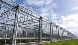 Szklarnia w Westland w holandiach fotografia royalty free