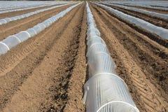 Szklarnia wykłada dla narastających upraw Zdjęcie Stock