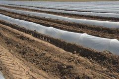 Szklarnia wykłada dla narastających upraw Obrazy Stock