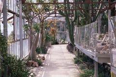 Szklarnia z mnóstwo kaktusami fotografia stock