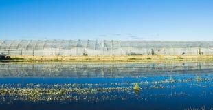 Szklarnia z odbiciem w ryżu polu Fotografia Royalty Free