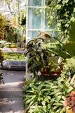 Szklarnia z r??norodnymi paprociami, palmami i innymi tropikalnymi ro?linami w s?onecznym dniu, Salowa botaniczna cieplarnia zdjęcia royalty free