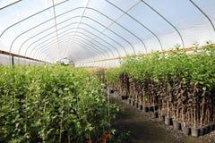 szklarniana pepiniery Oregon roślina obrazy royalty free