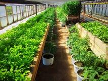Szklarniane rośliny Zdjęcia Stock