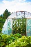 szklarniany łąka ogród Zdjęcie Royalty Free