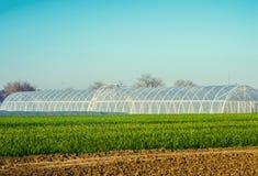 Szklarnie w polu dla rozsad uprawy, owoc, warzywa, pożycza rolnicy, ziemie uprawne, rolnictwo, obszary wiejscy, agro obraz stock
