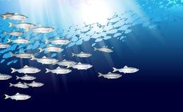Szkoła śledziowa Baltic ryba Morski życie Alozy wektorowa ilustracja optymalizująca od używać w tło projekcie, dekoracja royalty ilustracja