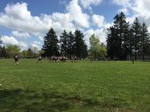 Szkoła Średnia rugby gra Obraz Royalty Free