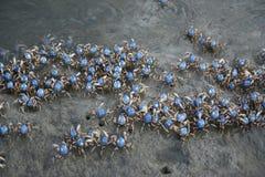 Szkoły Żołnierza Krab zdjęcie royalty free
