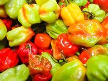 Szkoccy czapeczki chili pieprze Fotografia Royalty Free