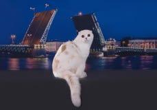 Szkoccy kotów spacery na nabrzeżu Zdjęcie Royalty Free