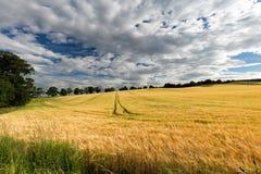 Szkocja pole Obraz Royalty Free