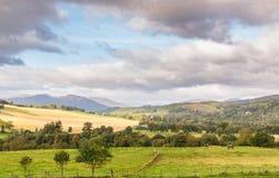 Szkocja zbocze z koniami, górami i drzewami, zdjęcie royalty free