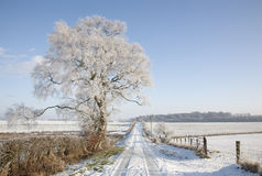 Szkocka śnieżna scena Obraz Royalty Free