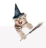 Szkocka figlarka z kapeluszem dla Halloween z czarownicy miotły kijem przyglądającym przez plakata out i Odizolowywający na bielu Zdjęcie Stock