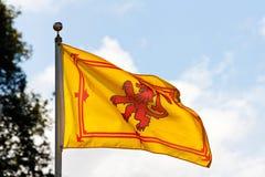 Szkocka flaga Nieokiełznany lew fotografia royalty free