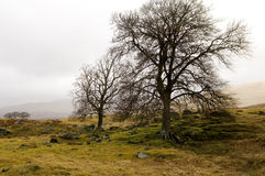 szkocka krajobrazu Obrazy Royalty Free