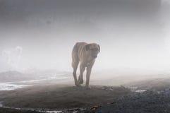 Szkocka mgła W kraju Turcja Obrazy Royalty Free