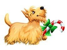 Szkocka Terrier i cukierku trzcina Zdjęcia Royalty Free