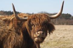 szkocki góral fotografia stock