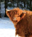 Szkockiego Gaelic średniogórze Zdjęcie Royalty Free