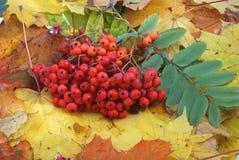 szkotowy jesień kolor żółty Zdjęcia Royalty Free
