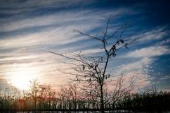Szlachetny drzewo fotografia stock