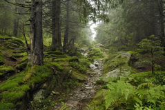 szlakowy lasu wilde Obrazy Stock