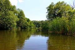 Szmaragdowa rzeka w lesie Zdjęcie Royalty Free