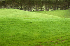 szmaragdowa ziemia uprawna Zdjęcie Stock