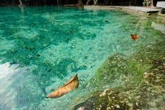 Szmaragdowej zieleni basen w Tajlandia Zdjęcie Royalty Free