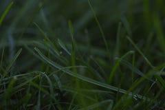 Szmaragdowej zieleni gazon zdjęcia stock
