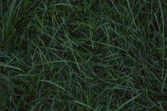 Szmaragdowej zieleni gazon obrazy royalty free