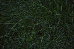 Szmaragdowej zieleni gazon fotografia royalty free
