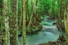 Szmaragdowy basen jest niewidzianym basenem w namorzynowym lesie przy Krabi w Tajlandia, woda przepływ, długie ujawnienie technik Obraz Royalty Free