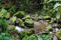 Szmaragdowy basen na tropikalnej wyspie Dominica Obraz Royalty Free