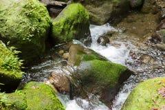 Szmaragdowy basen rockowy basen w sercu tropikalny las deszczowy na Dominica Zdjęcia Royalty Free